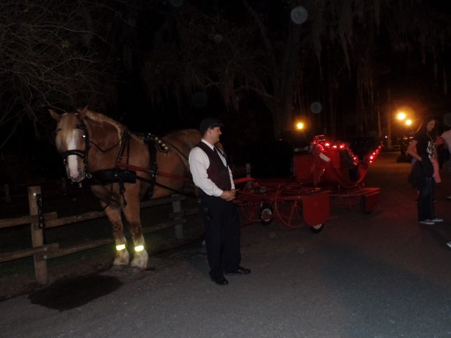 Our horse, Corbin, waiting to take us on our magical journey.